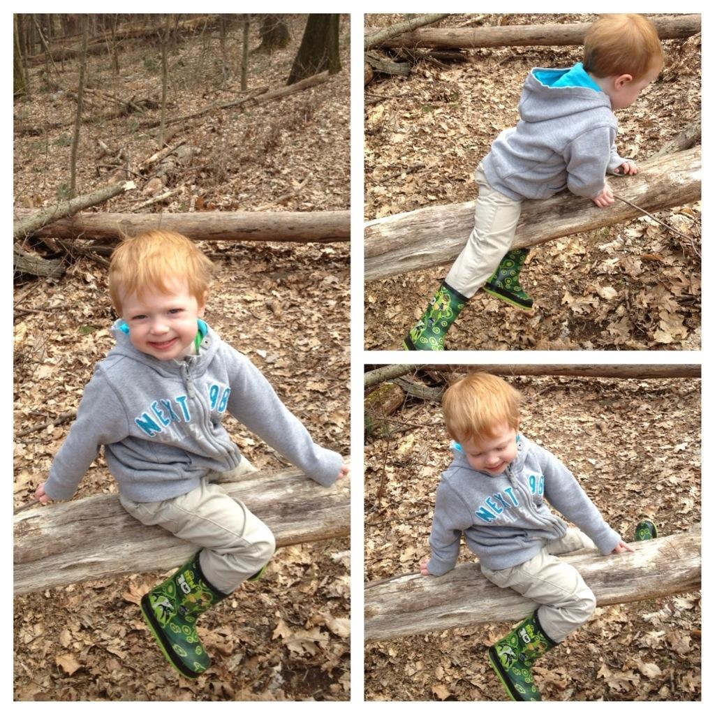 Walk in the Woods 7