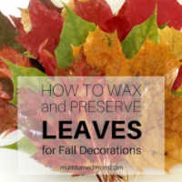 How to Wax and Preserve Leaves for Fall Decorations - Related