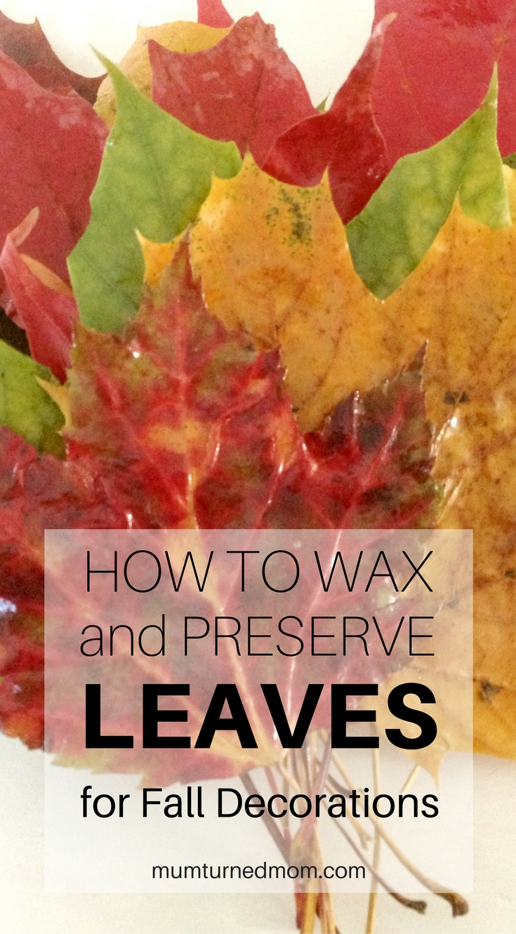 how-to-wax-and-preserve-leaves-for-fall-decorations