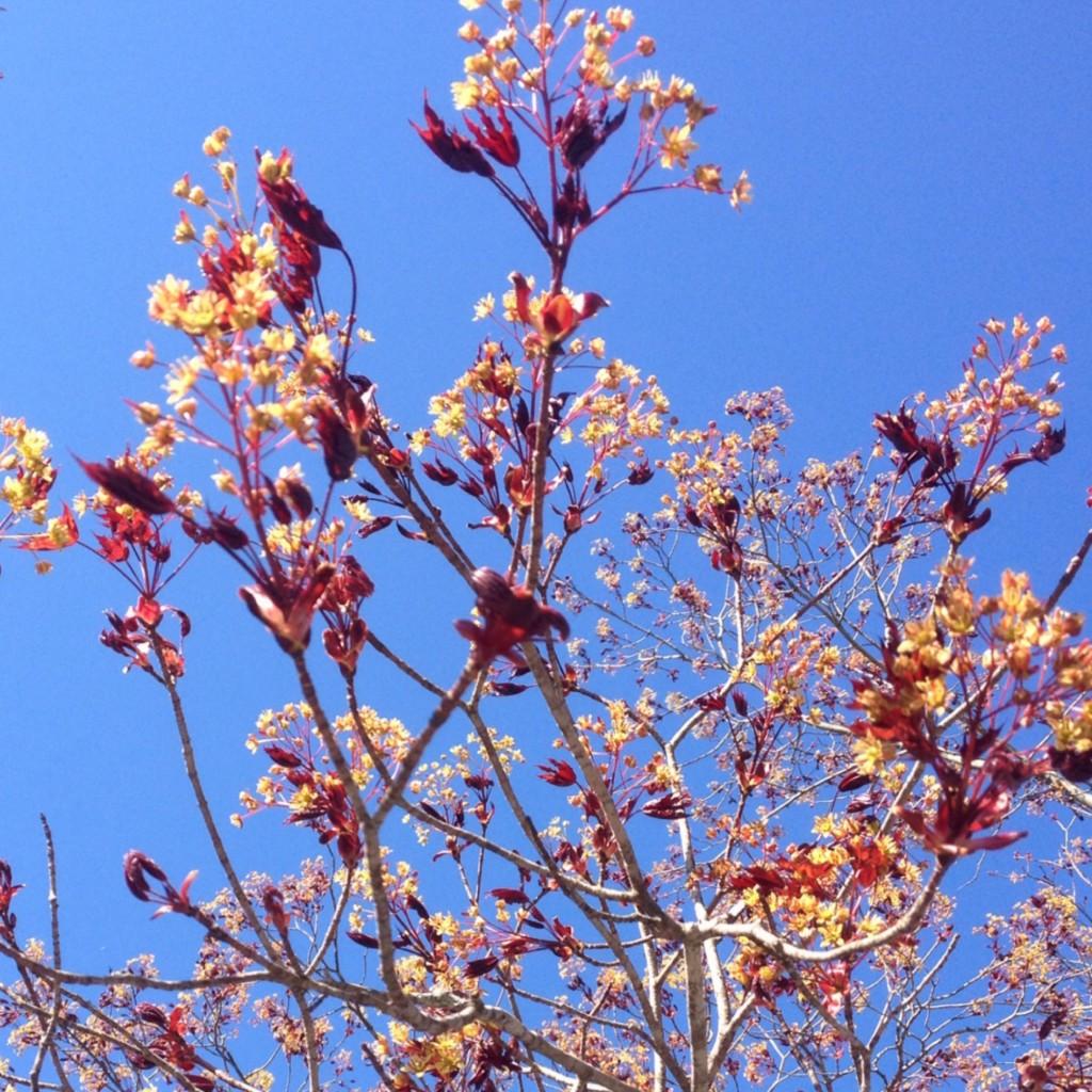 Blossom 8