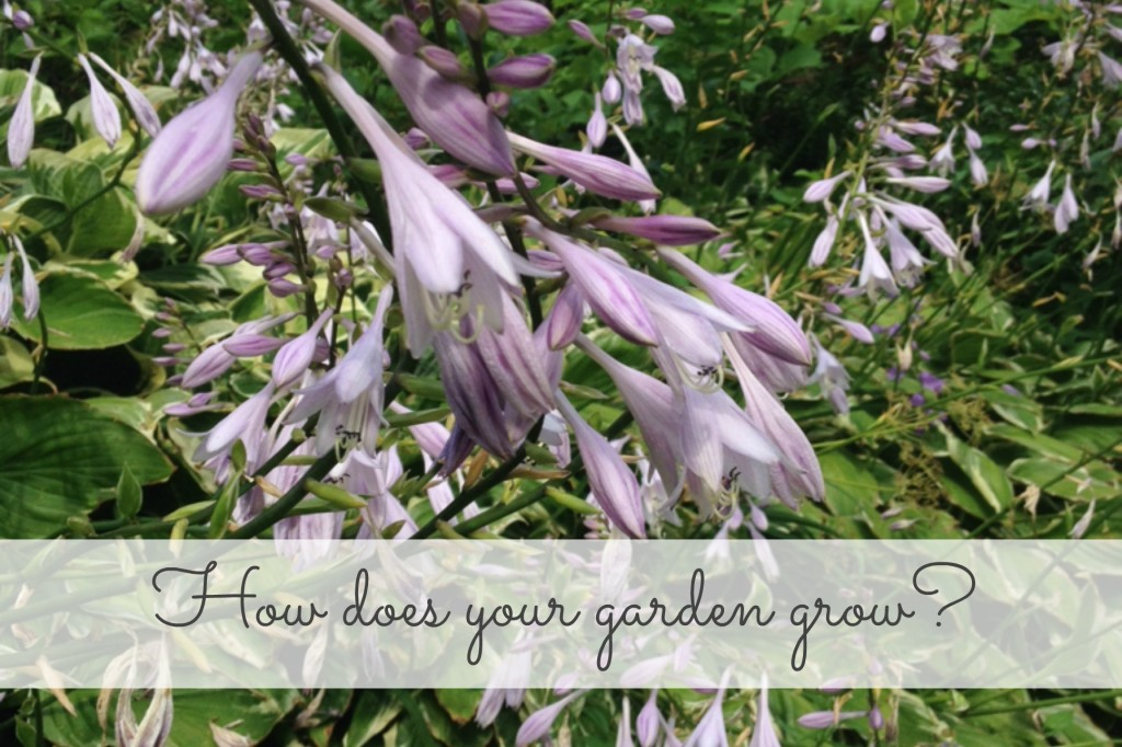 How does your garden grow 140730