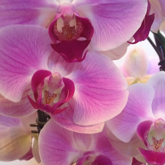 O is for Orchids #alphabetphoto