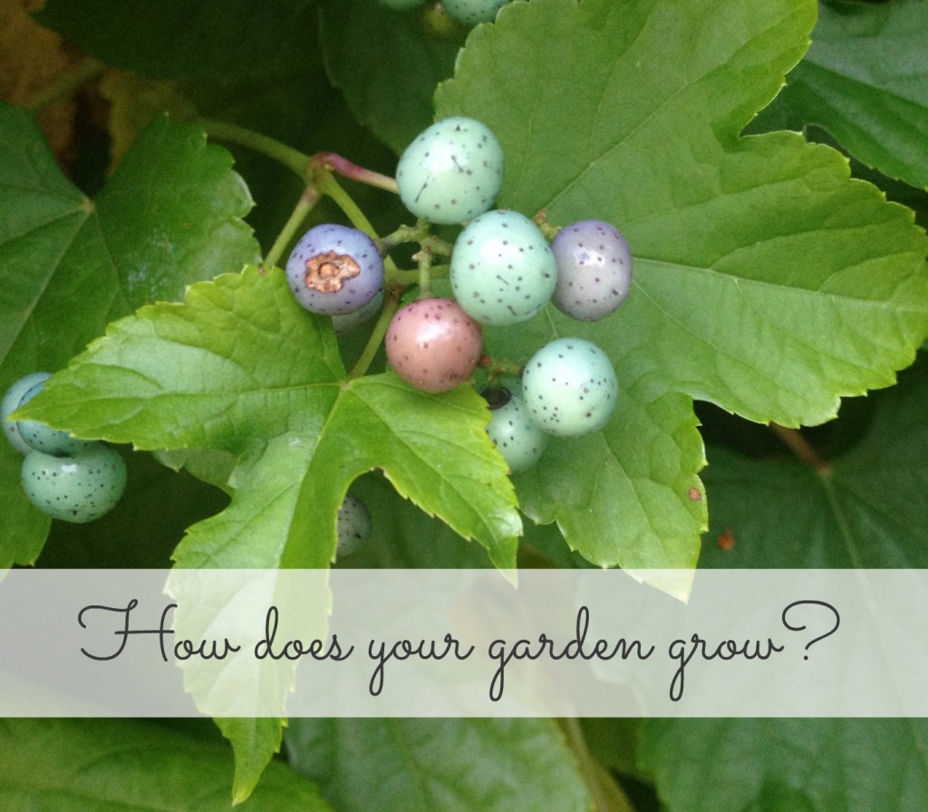 How does your garden grow 141002
