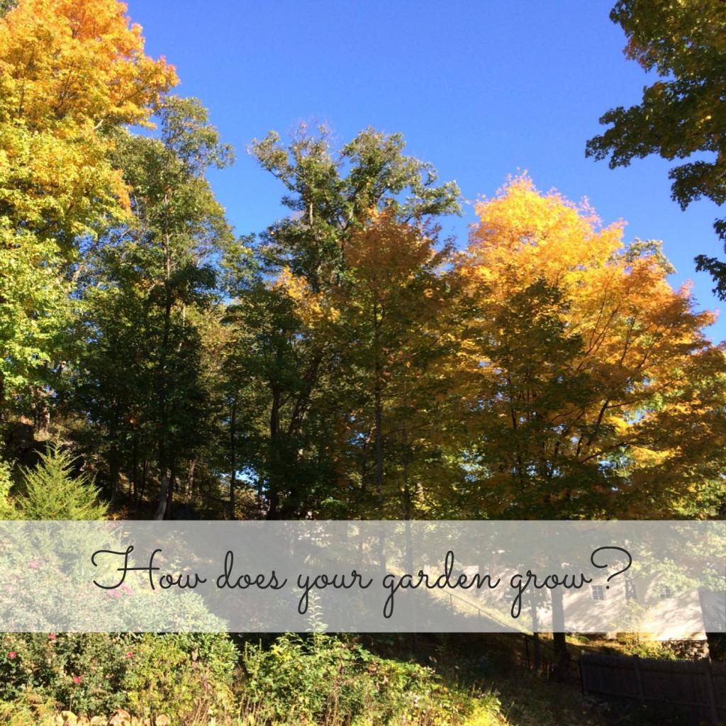 Our Garden: as Fall begins