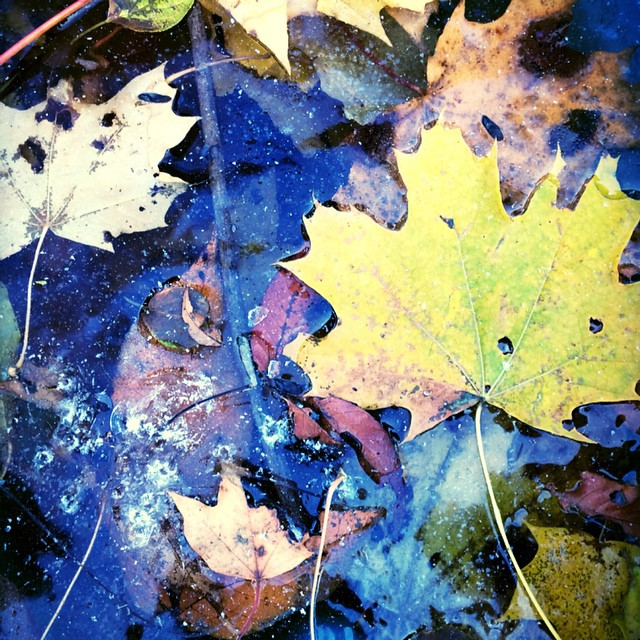 #mysundayphoto #silentsunday #capturingcolour #fall #winter #leaves