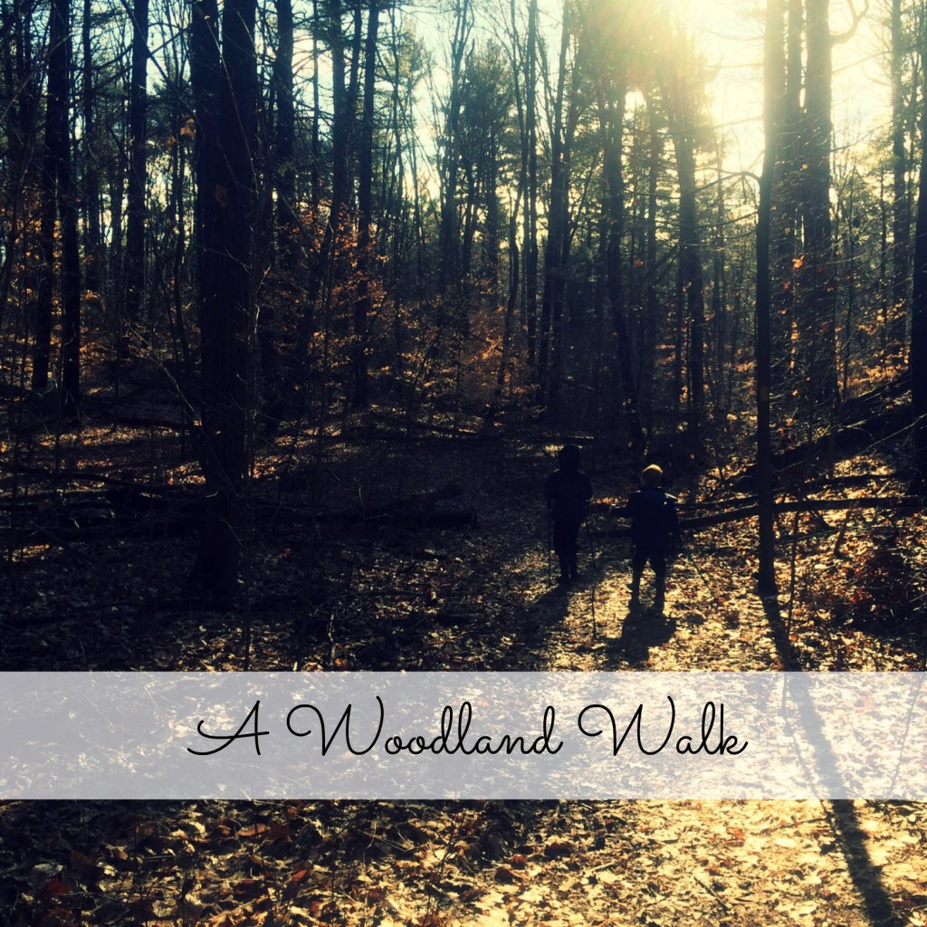 Country Kids: a woodland walk