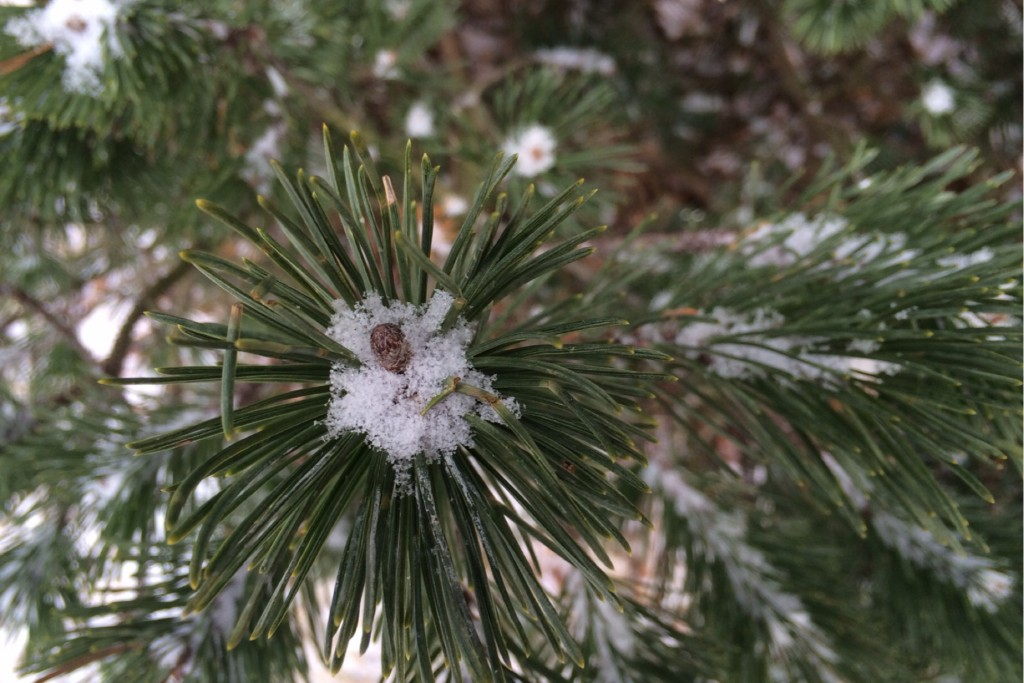 Light Snow 2
