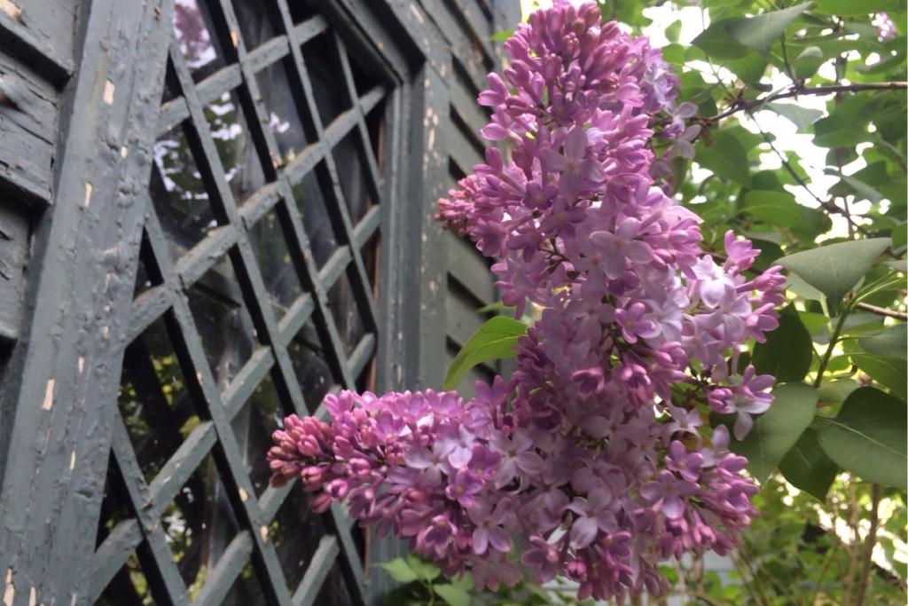 Spring Blossoms 10