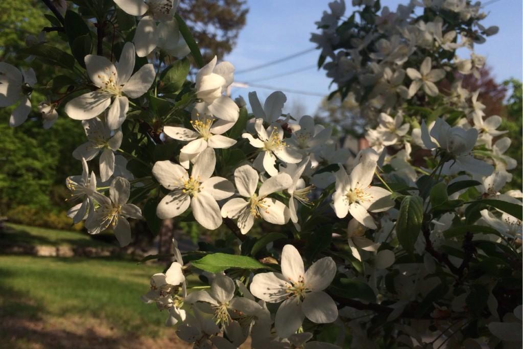 Spring Blossoms 14