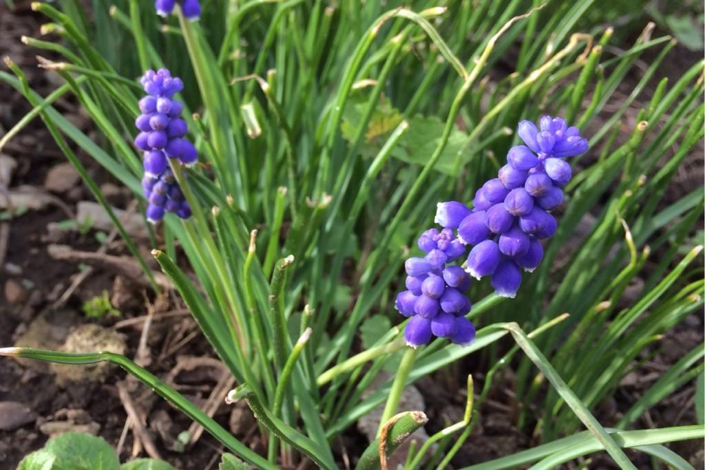 Spring at Last 7