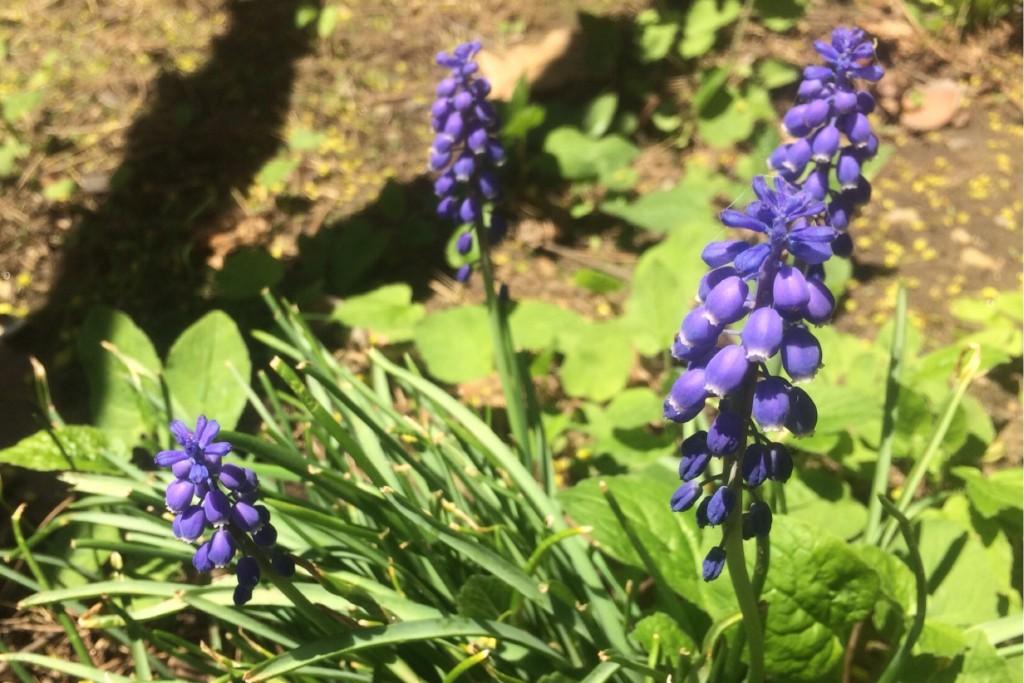 Spring at Last 8