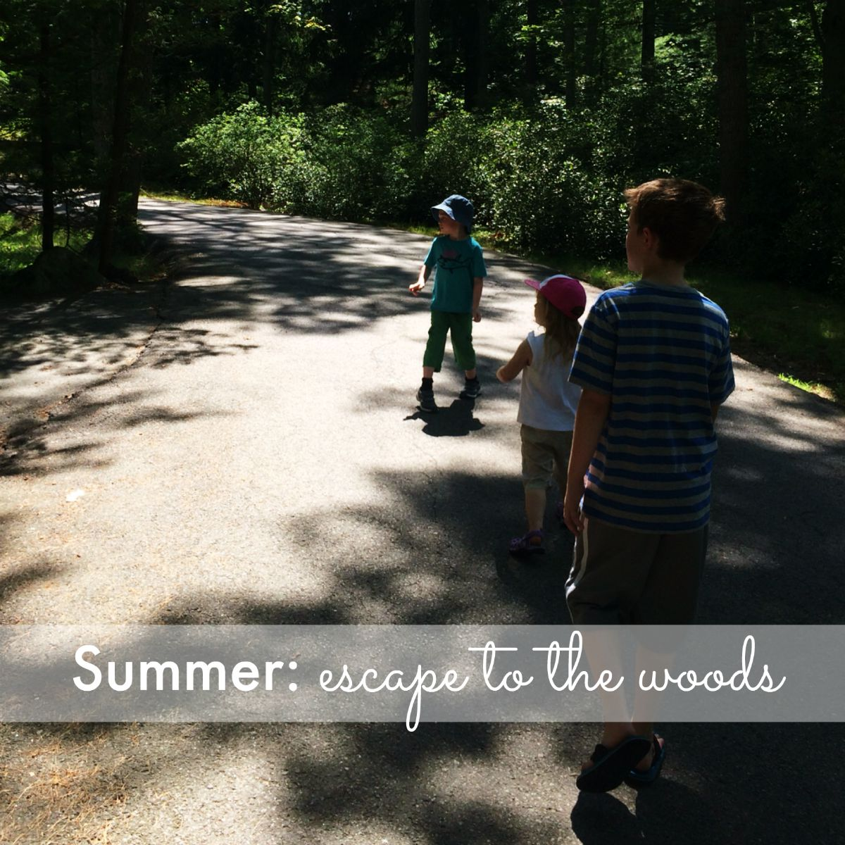 Summer: escape to the woods