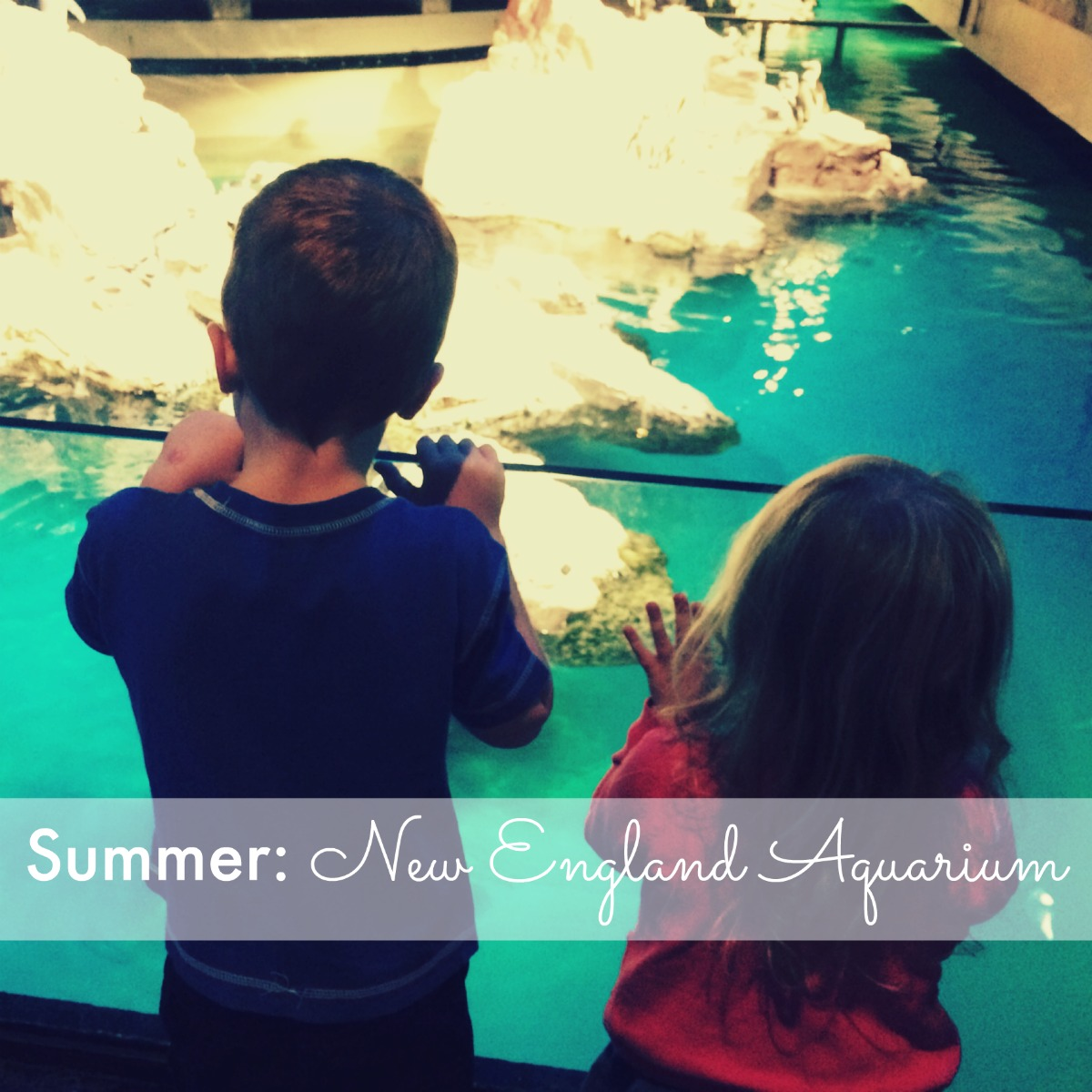 Summer: New England Aquarium