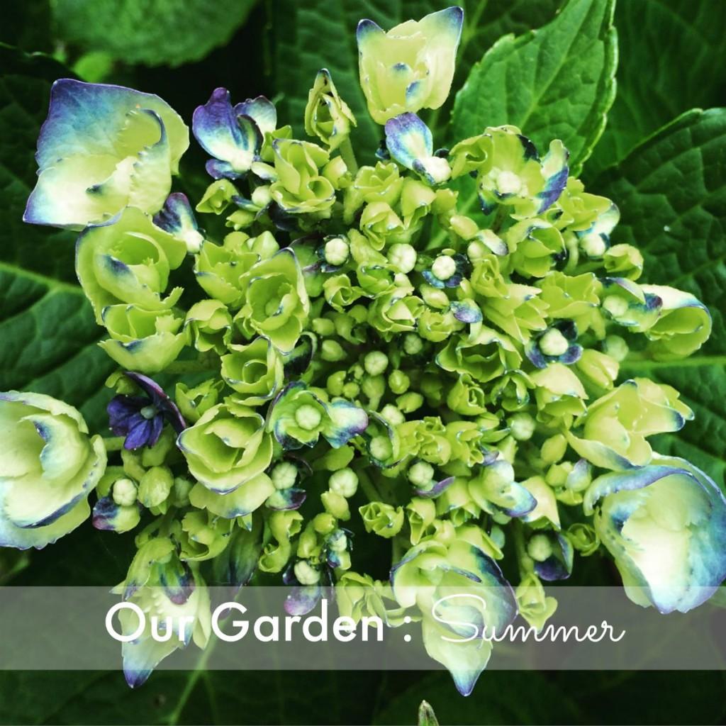Our Garden Summer