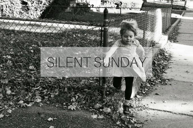 Silent Sunday: 8 November 2015