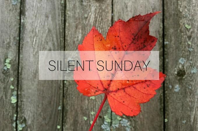 Silent Sunday: 15 November 2015
