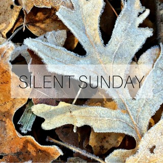Silent Sunday 151122 Featured