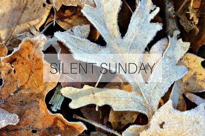Silent Sunday: 22 November 2015