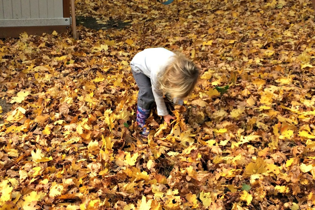 The Joy of Leaves 1