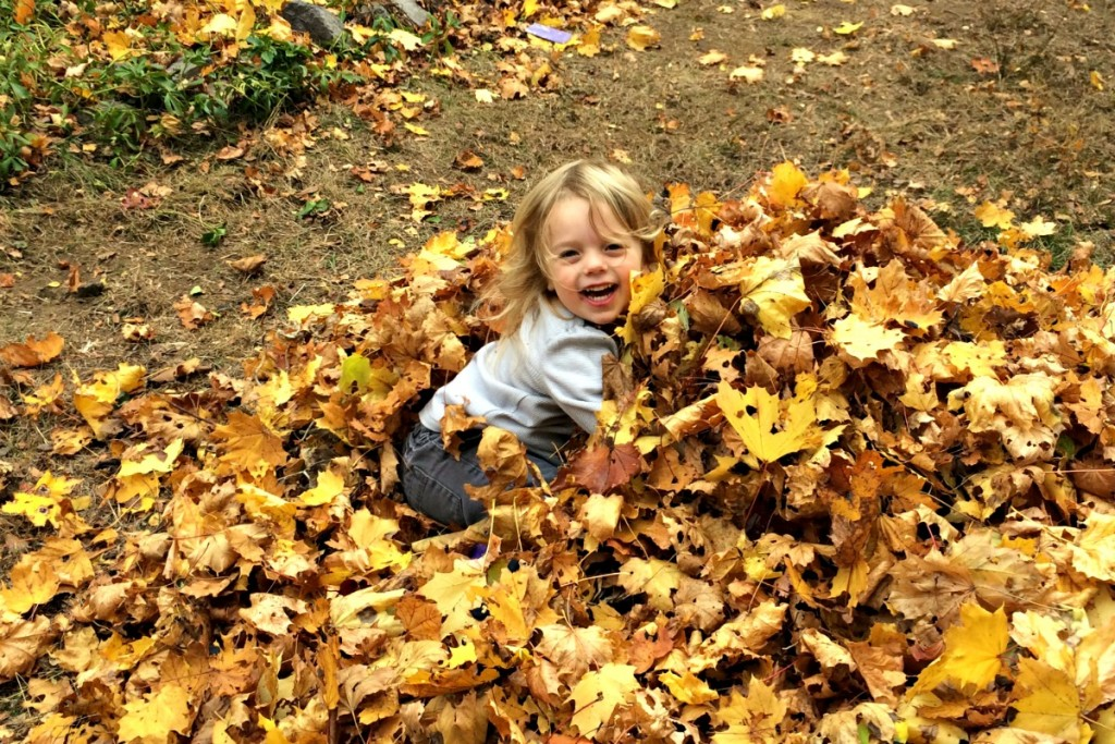 The Joy of Leaves 7