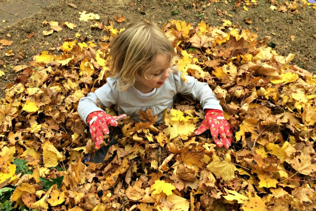 The Joy of Leaves 8