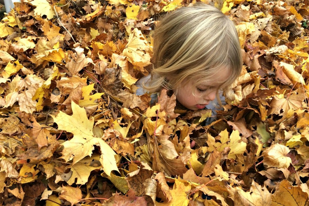 The Joy of Leaves 9