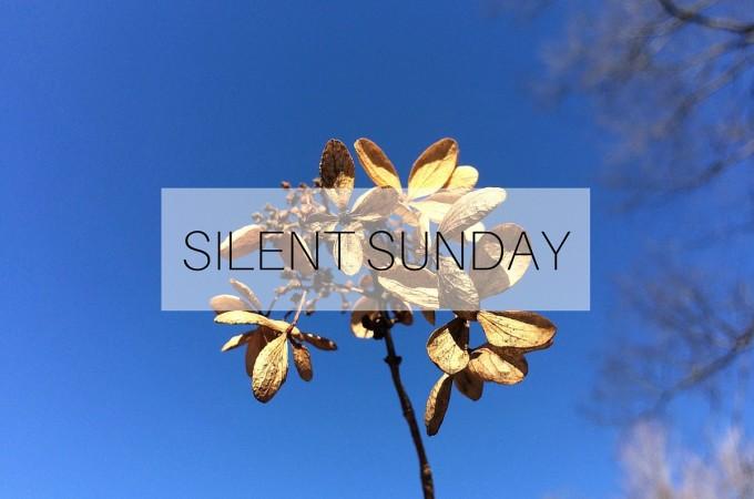 Silent Sunday: 6 December 2015