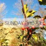 SUNDAY PHOTO 160110 Featured