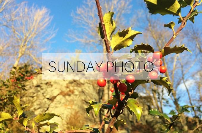 Sunday Photo: 10 January 2016