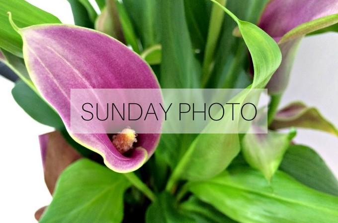 SUNDAY PHOTO 160131 Featured