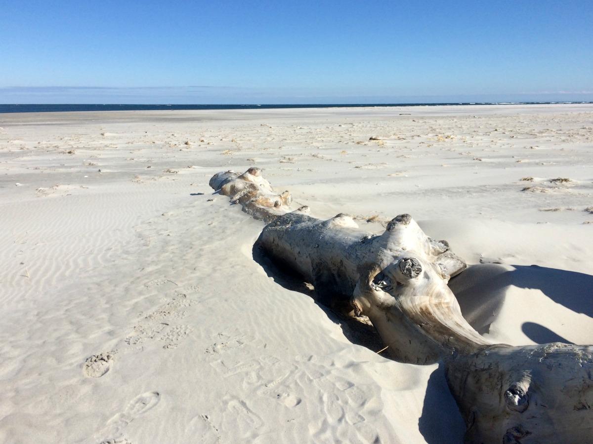 Crane Beach 15