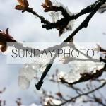 SUNDAY PHOTO 160417 Featured