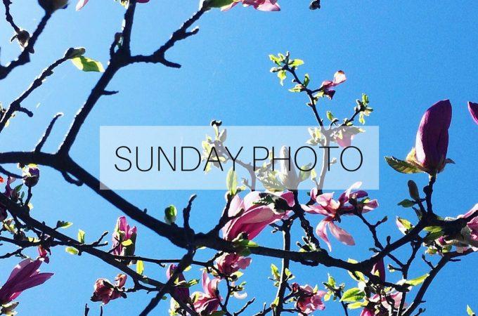 Sunday Photo 160501 Featured