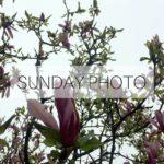 SUNDAY PHOTO 160508 Featured