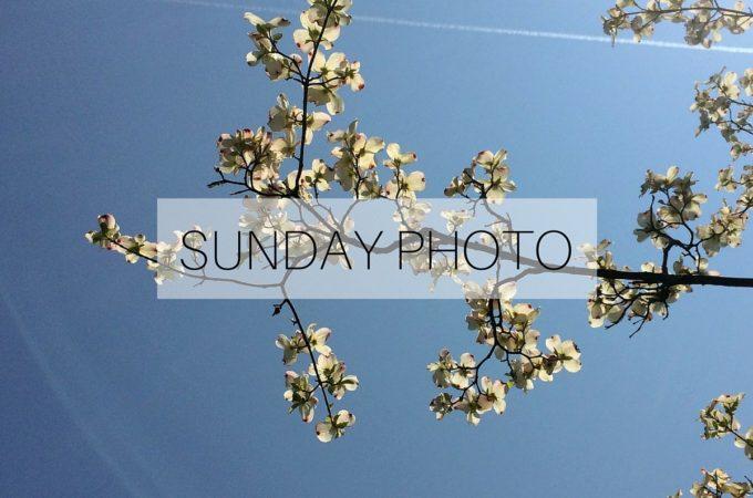 SUNDAY PHOTO 160522 Featured