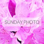 SUNDAY PHOTO 160605 Featured