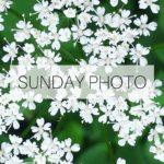 SUNDAY PHOTO 160612 Featured
