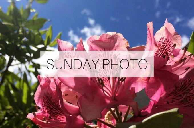 SUNDAY PHOTO 160619 Featured