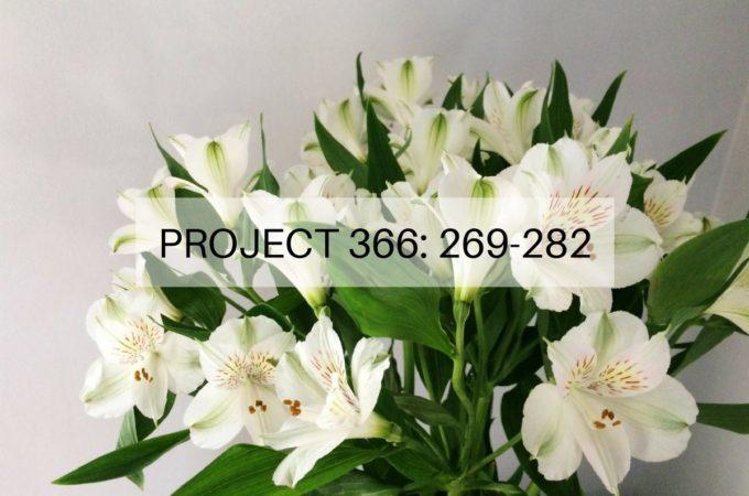 Project 366: Week 39-40: 269-282