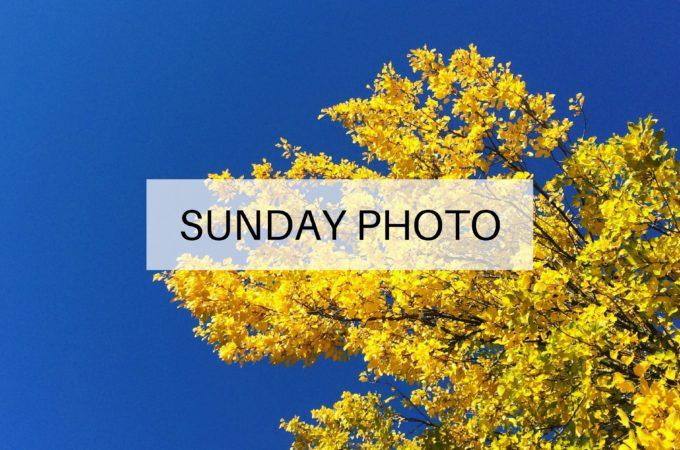 Sunday Photo: 30 October 2016
