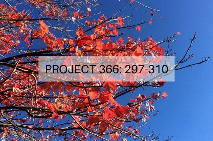 Project 366: Week 43-44: 297-310
