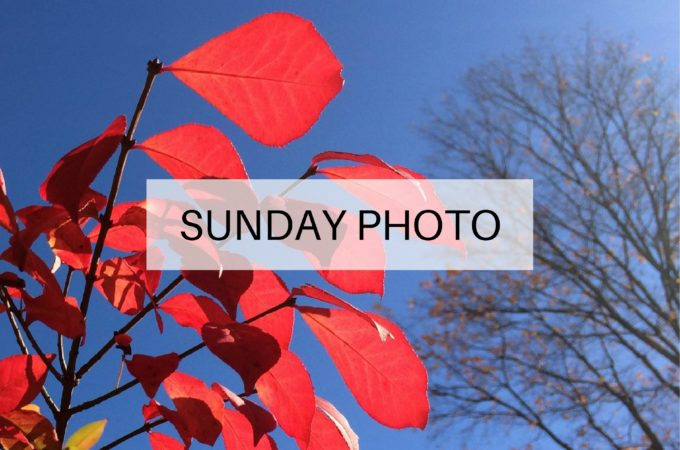 Sunday Photo: 13 November 2016