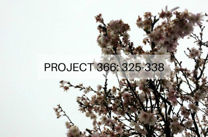 Project 366: Week 47-48: 325-338