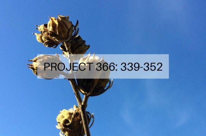 Project 366: Week 49-50: 339-352