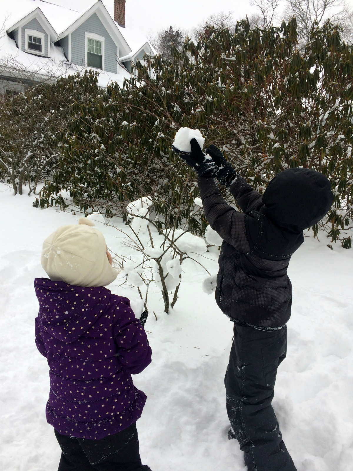 Snowballs 1