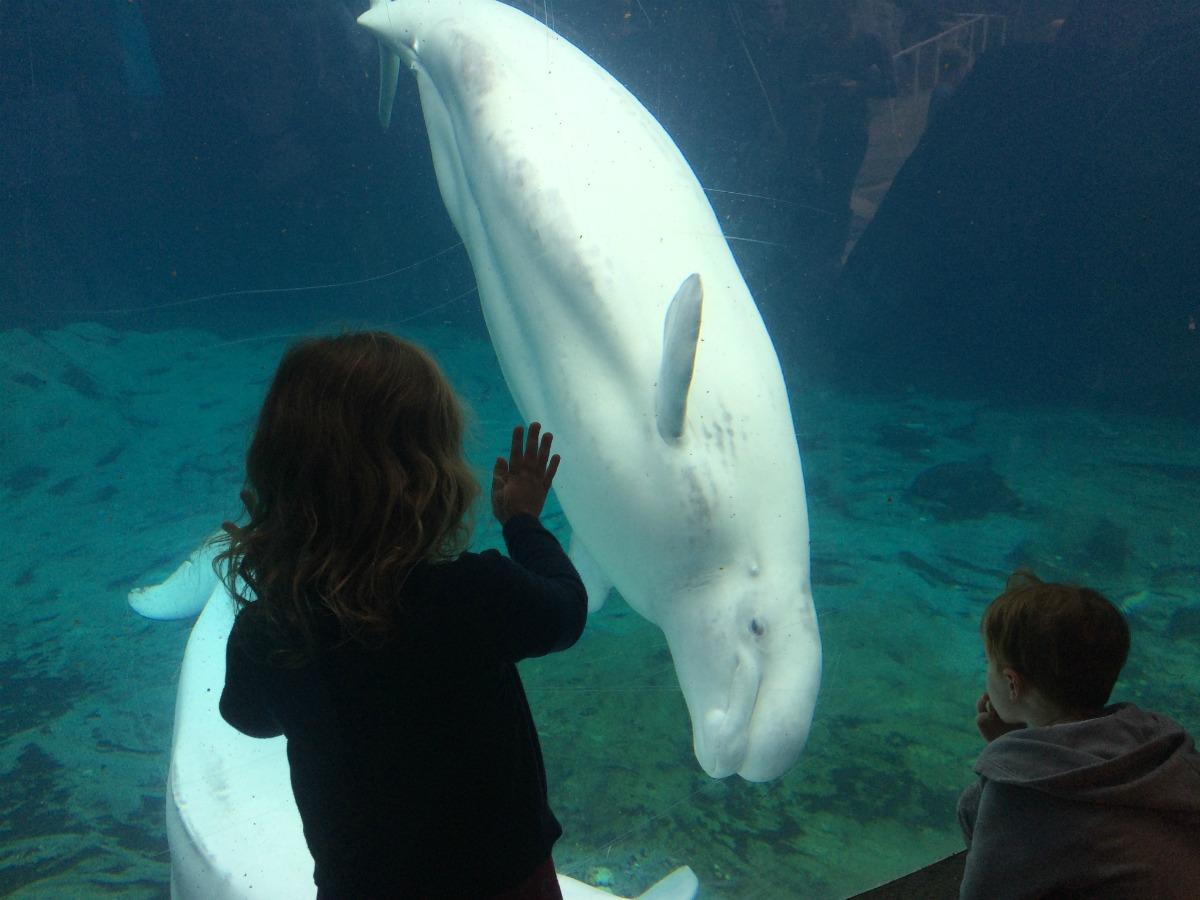 Mystic Aquarium 1