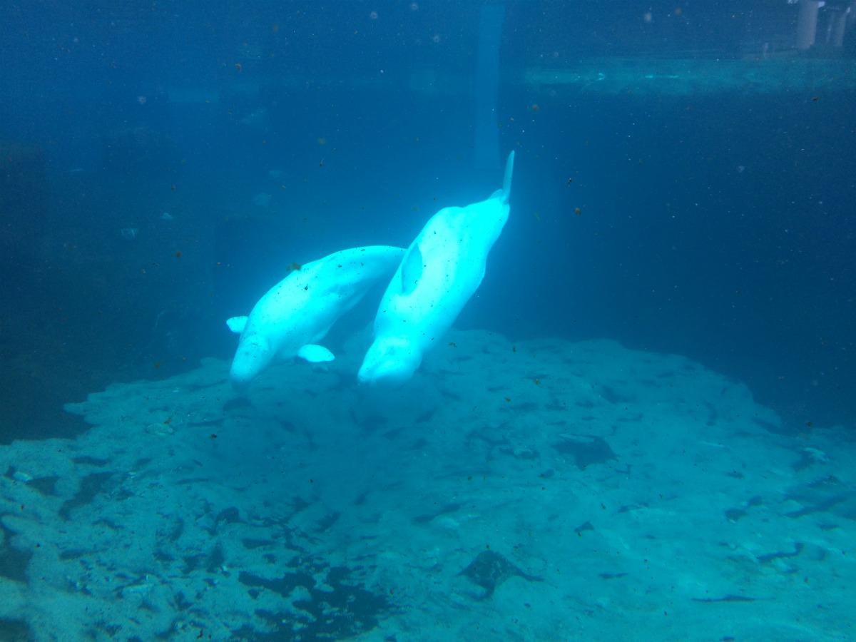 Mystic Aquarium 2