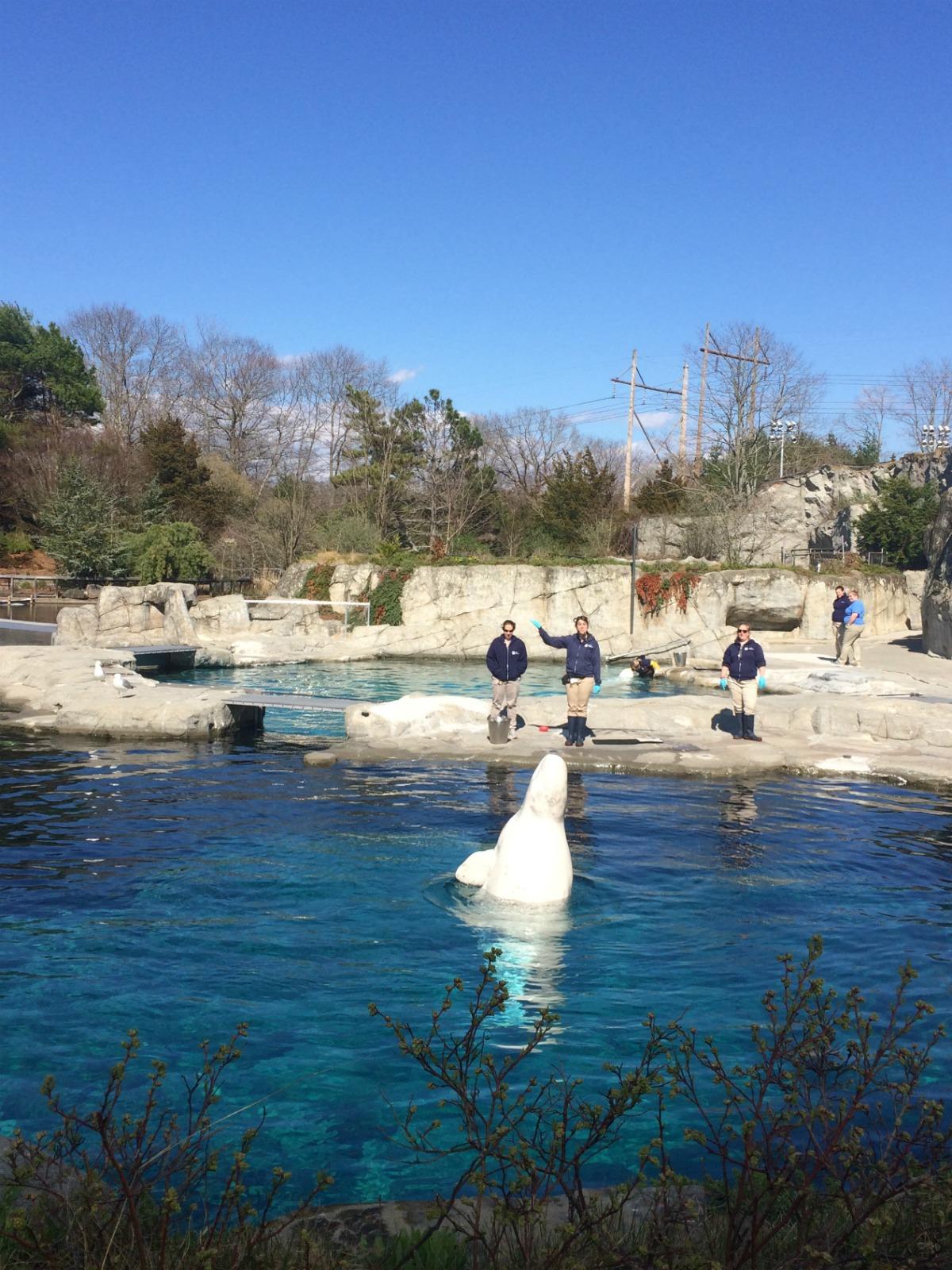 Mystic Aquarium 3