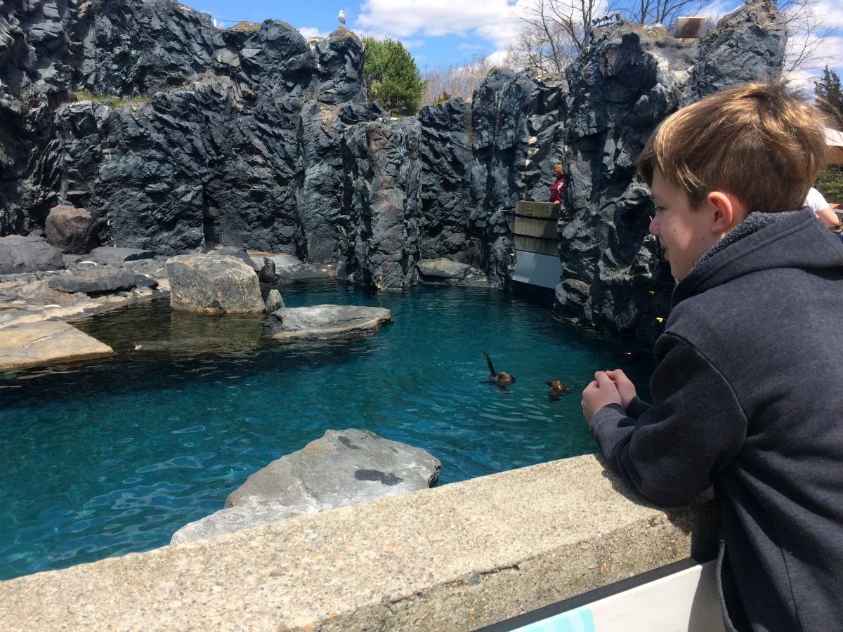 Mystic Aquarium 6