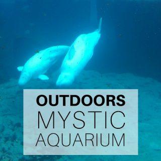 Outdoors - Mystic Aquarium